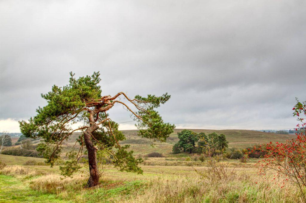 Baum bei Peetzig